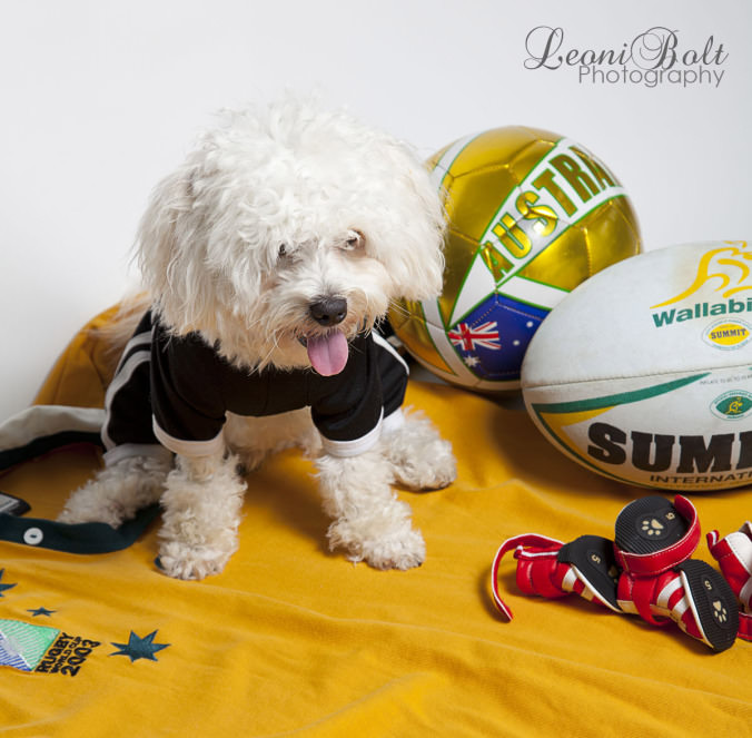 puppy with football gear