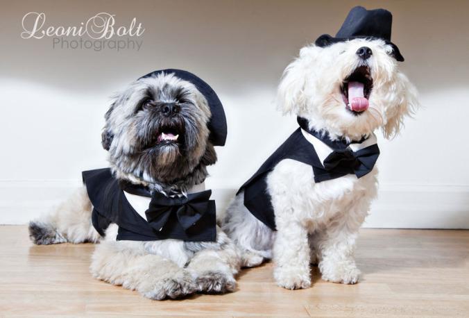prestige dogs